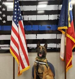 K-9 Officer Rex, 8, Greenville,  June 2010 – March 2019