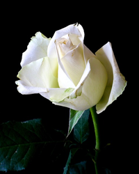 SARA (keesee) GIBSON, 74, COMMERCE,  November 10, 1946 – July 17, 2021